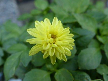 FOTKA - žlutá