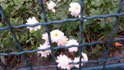 FOTKA - jen pár kvítků za plotem