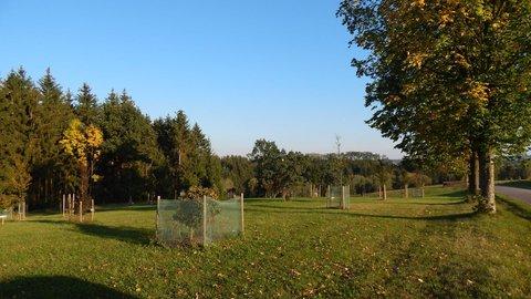 FOTKA - nově vznikající arboretum