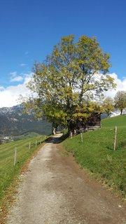 FOTKA - Hezký podzimní den na Ritzensee - Strom u cesty