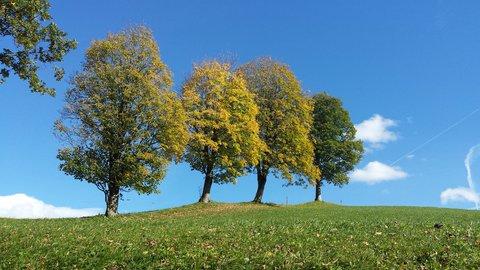 FOTKA - Hezký podzimní den na Ritzensee - Čtyři stromy