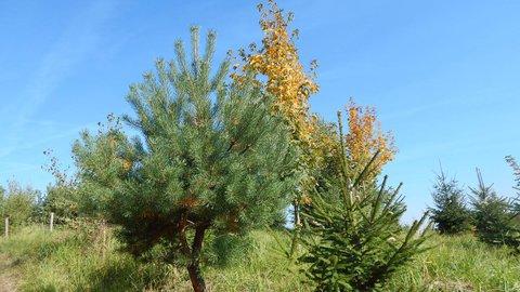 FOTKA - každý stromek jiný