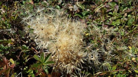 FOTKA - Podzimní procházka k Triefen - Odkvetlé