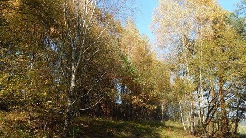 FOTKA - v listnatém lesíku