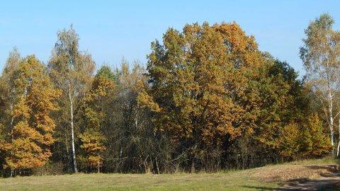 FOTKA - procházka podzimní krajinou