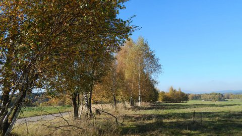 FOTKA - stromy při kraji cesty