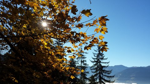 FOTKA - Podzimní procházka na Steinalm - Proti slunci