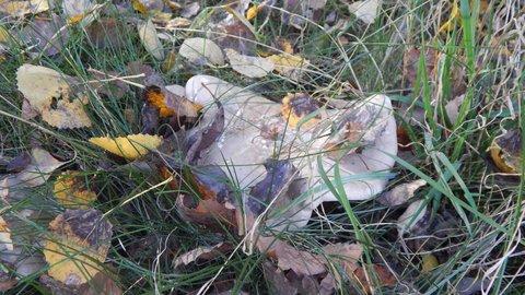 FOTKA - dobře maskovaná houba