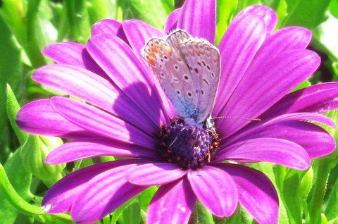 FOTKA - Letní foto s motýlem