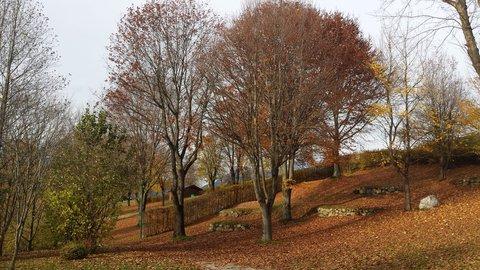 FOTKA - Podzimní procházka okolo Ritzensee - Podzimní stromy