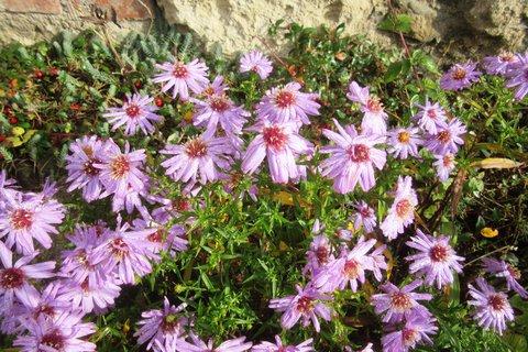 FOTKA - květy u zídky