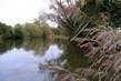 rybník a rákosí za humny