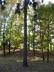 stromy v  městkém parku