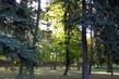 podzimní slunko v parku