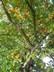 slunečník ze stromu a listí