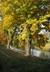 podzim a stromy u řeky
