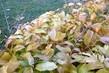 podzimní usýchání