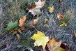 spadlé listí