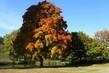 Strom v parku