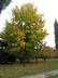 strom u parku