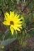 Poslední květ před zimou