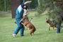 výcvik psu
