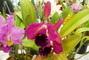orchideje,,
