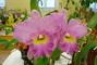 orchideje,,,,,,