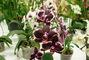 orchideje..