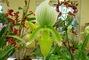 orchideje...