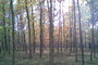 Dubový les v podzimním róbě