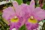 orchideje......