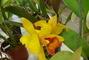 orchideje.......