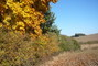 pole a stromy na podzim