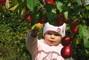 naše jablíčka