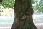 strom v zámeckém parku