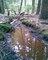 Potok uprostřed hlubokých lesů
