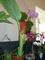 výstava květin,,,,,,,,,,