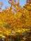 mám ráda podzim