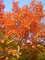 barvy lesa:-)