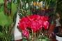 výstava květin......
