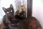 Koťátka s kočičkou..=)