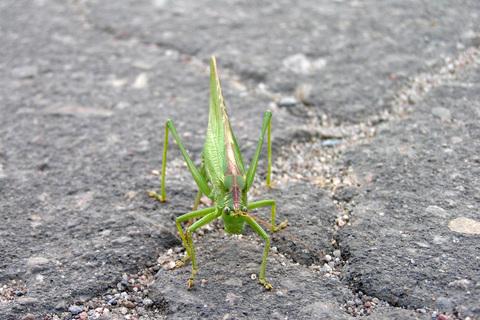 FOTKA - přihopsala k nám kobylka
