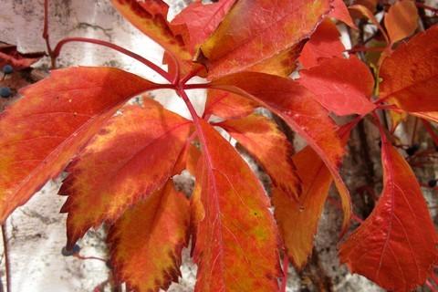 FOTKA - podzim zbarvuje