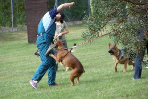 FOTKA - výcvik psu
