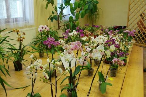 FOTKA - orchideje,