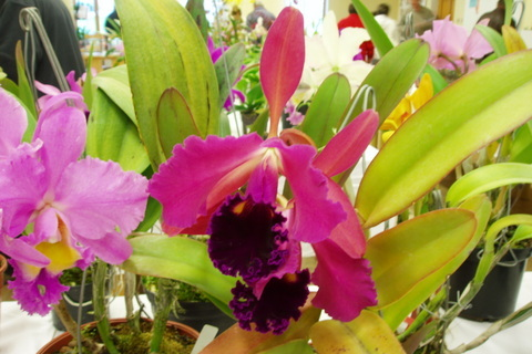 FOTKA - orchideje,,