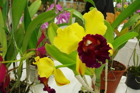 FOTKA - orchideje,,,