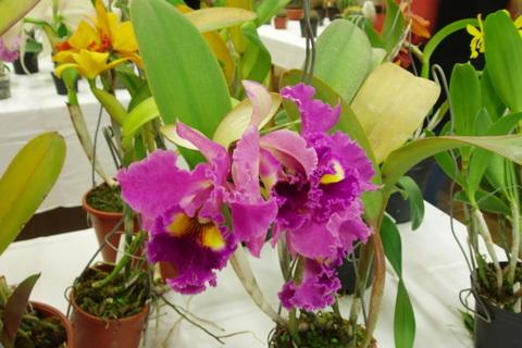 FOTKA - orchideje,,,,