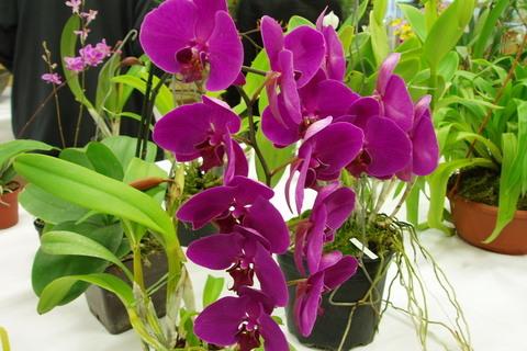 FOTKA - orchideje,,,,,